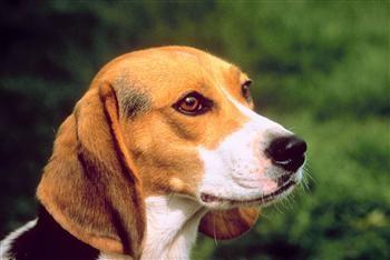 חיי כלב – החזקת כלבים בישראל
